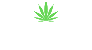 Marijuana Defense Attorney | Law Offices of David Sloane, PLLC